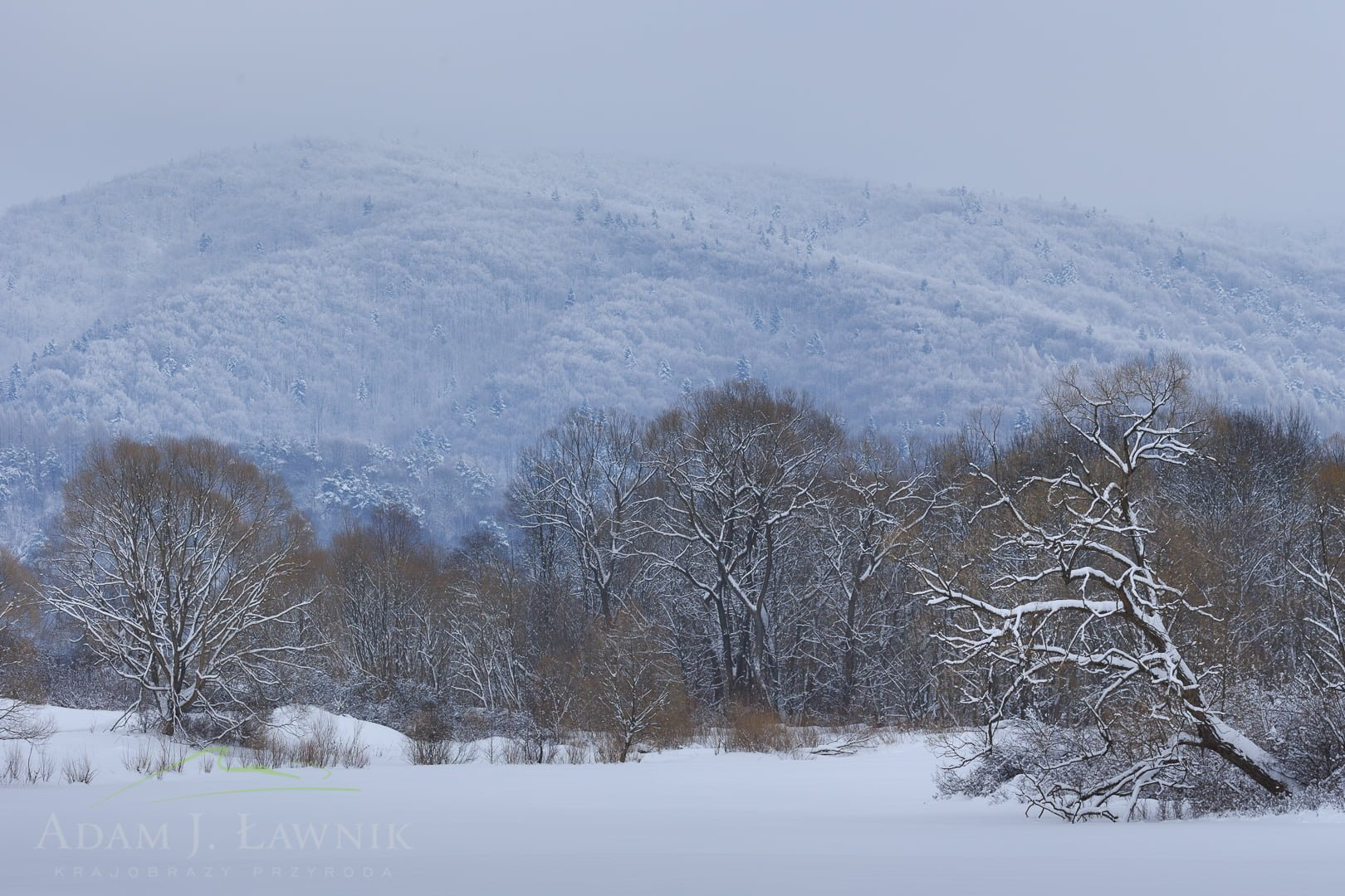 Magura National Park, Poland 1701-00104C
