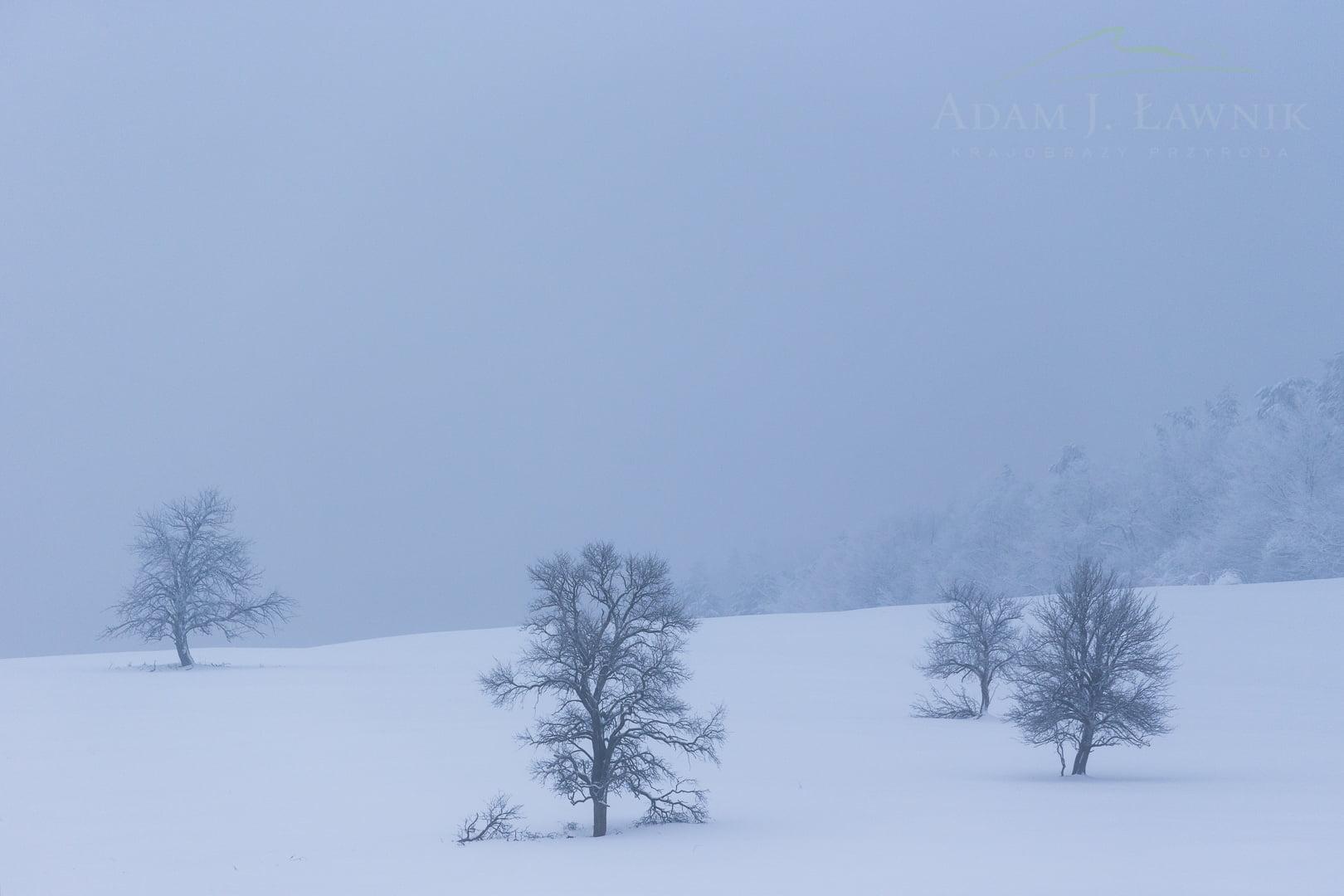 Magura National Park, Poland 1701-00111C