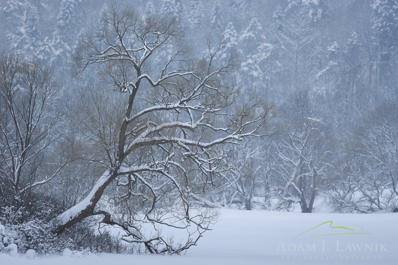 Magura National Park, Poland 1701-00116C