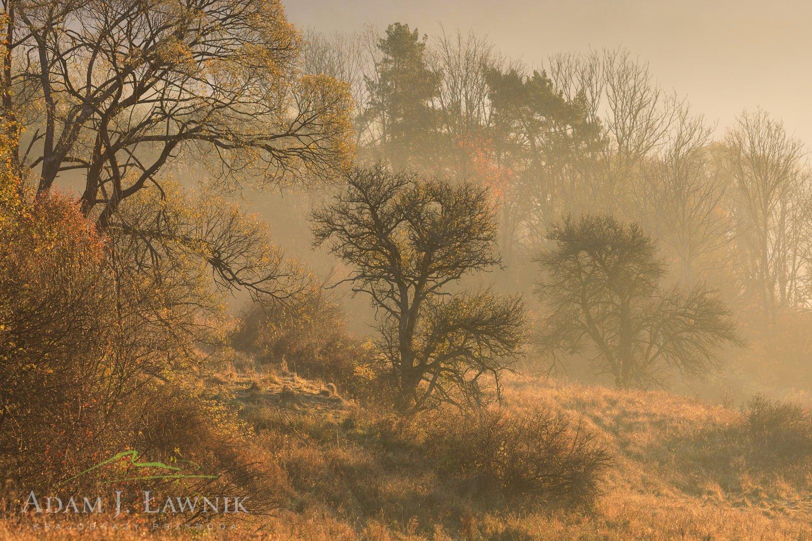 Magura National Park, Poland 1810-00492C