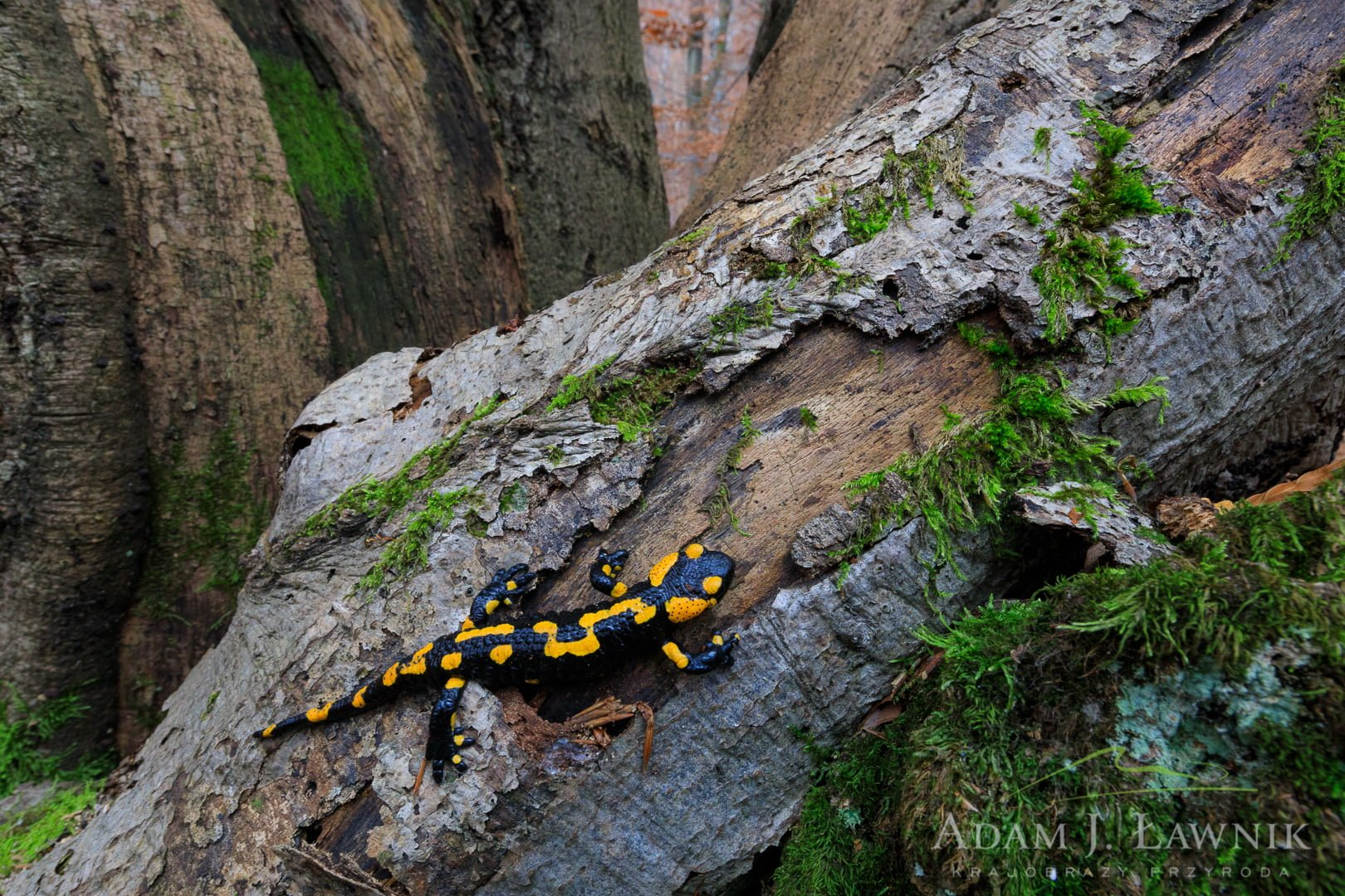 Magura National Park, Poland 1810-00527C