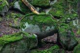 Diabli Kamień w Magurskim Parku Narodowym