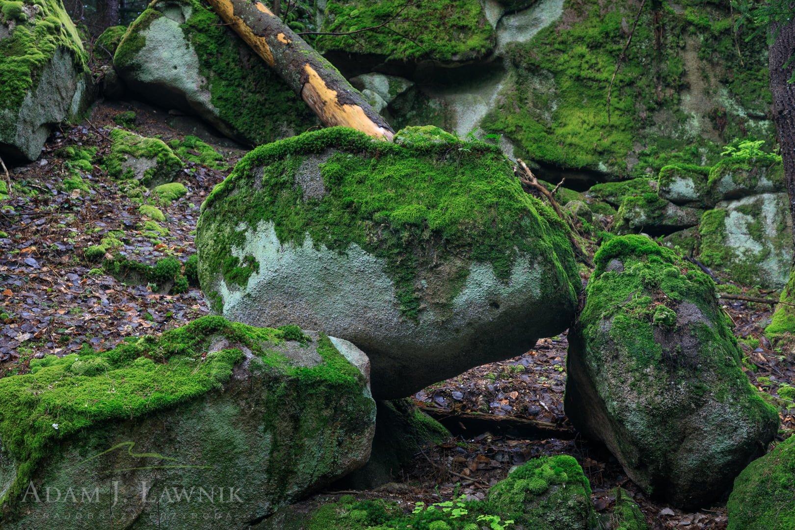 Magura National Park, Poland 1904-00059C