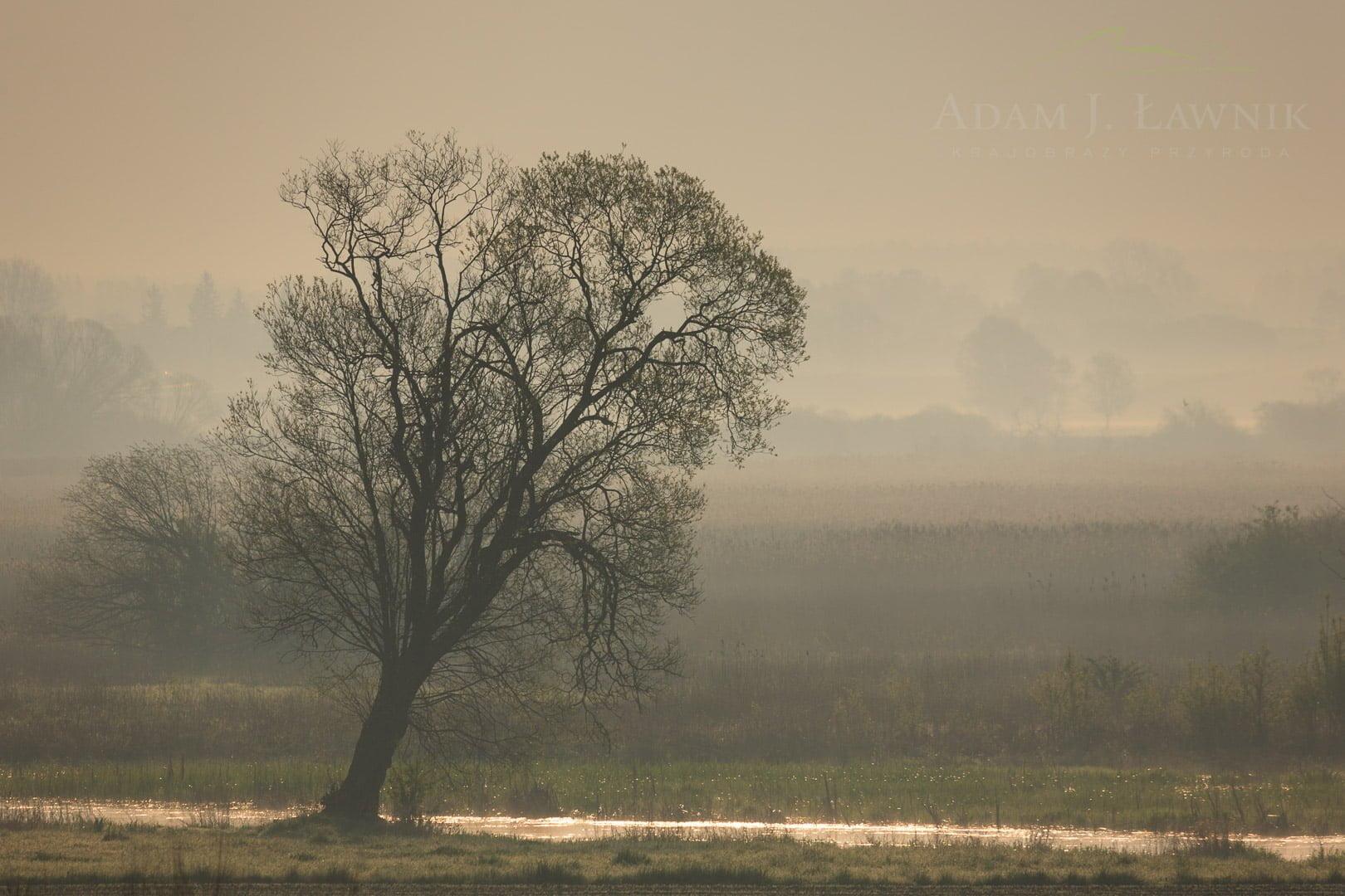Narew National Park, Poland 0804-00142C