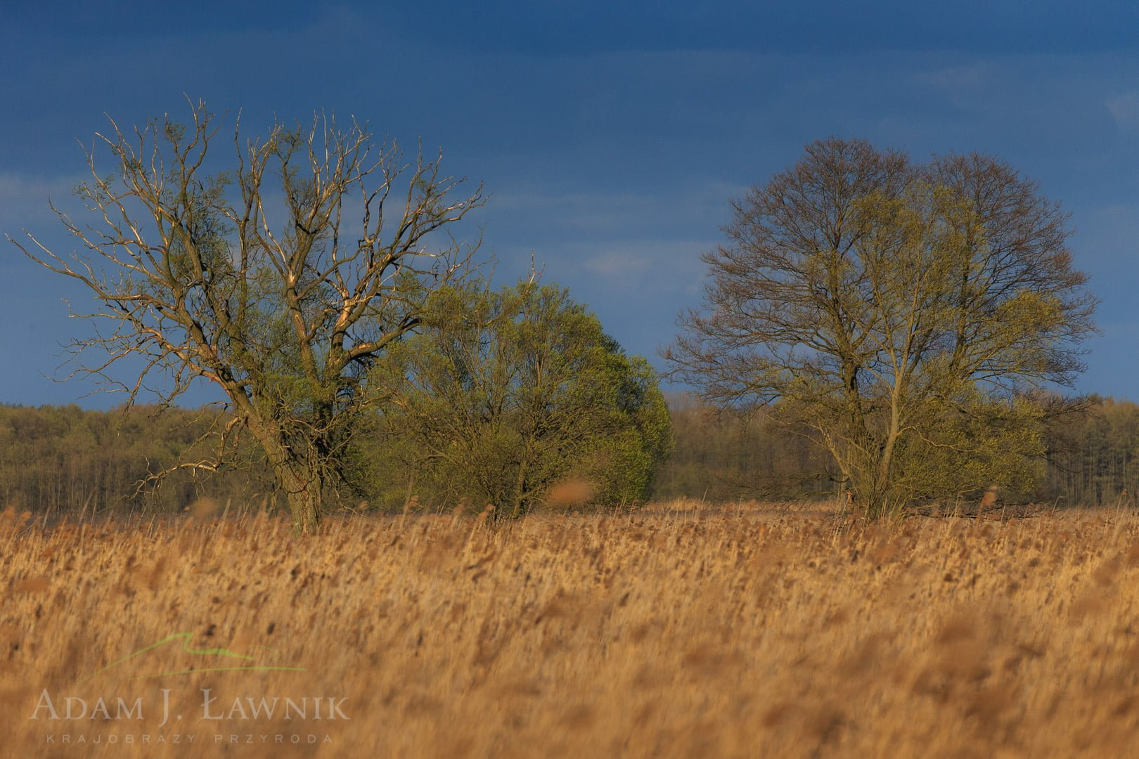 Narew National Park, Poland 1604-00658C