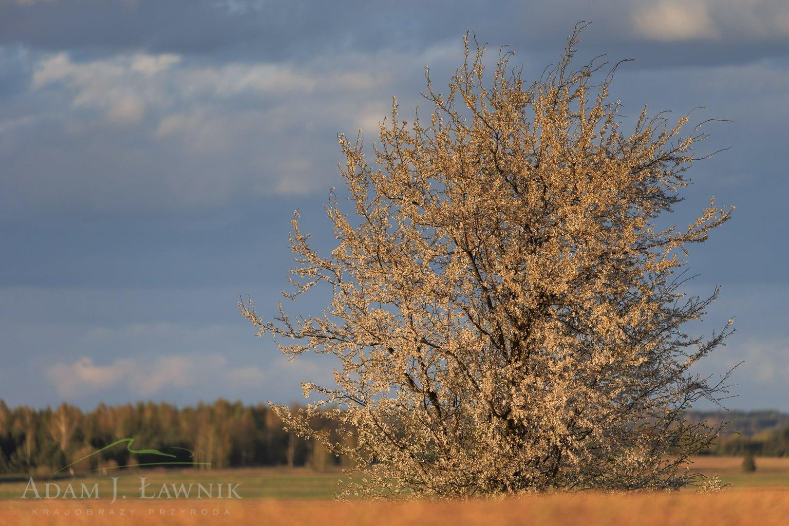 Narew National Park, Poland 1604-00659C