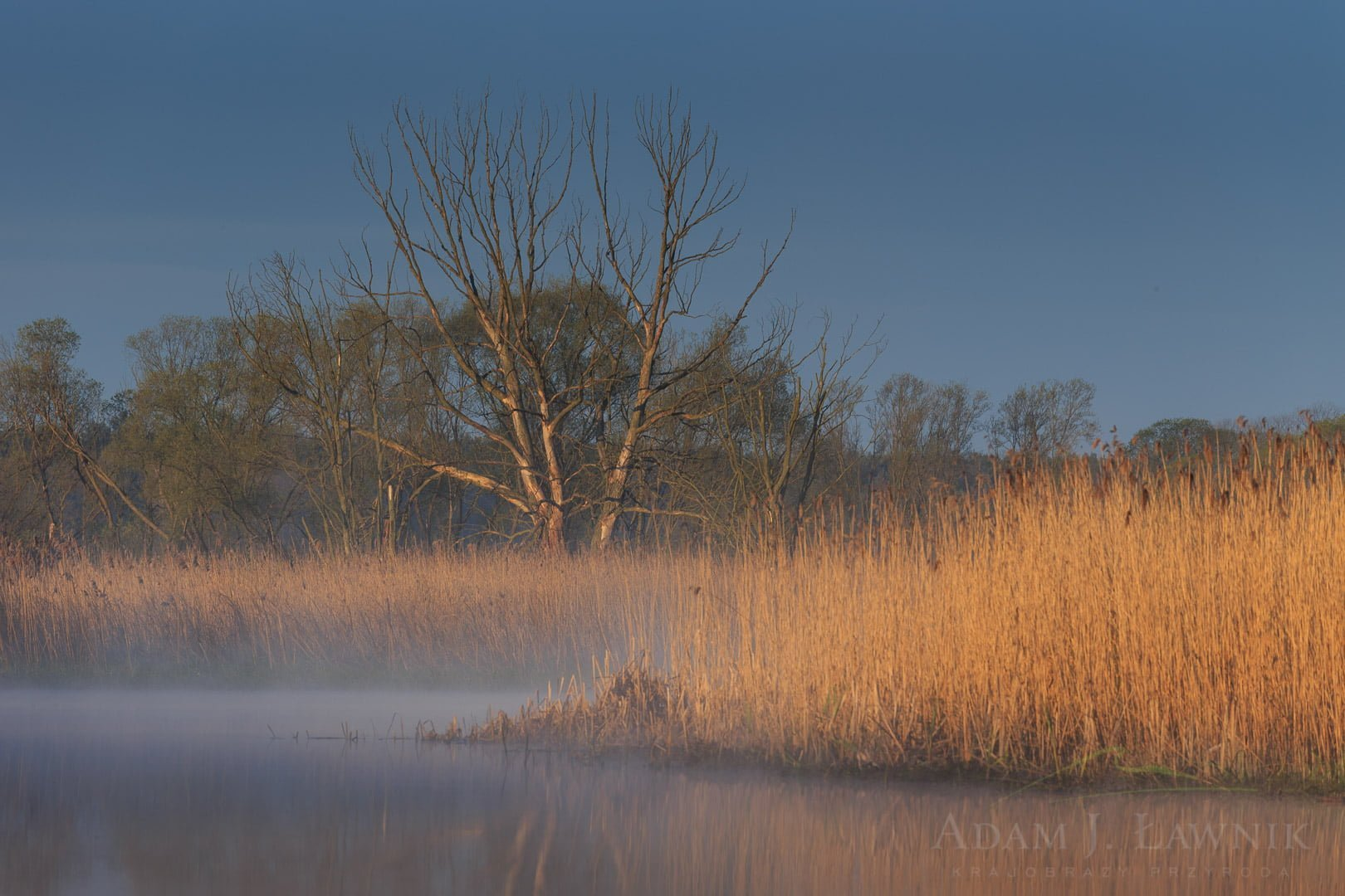Narew National Park, Poland 1604-00671C