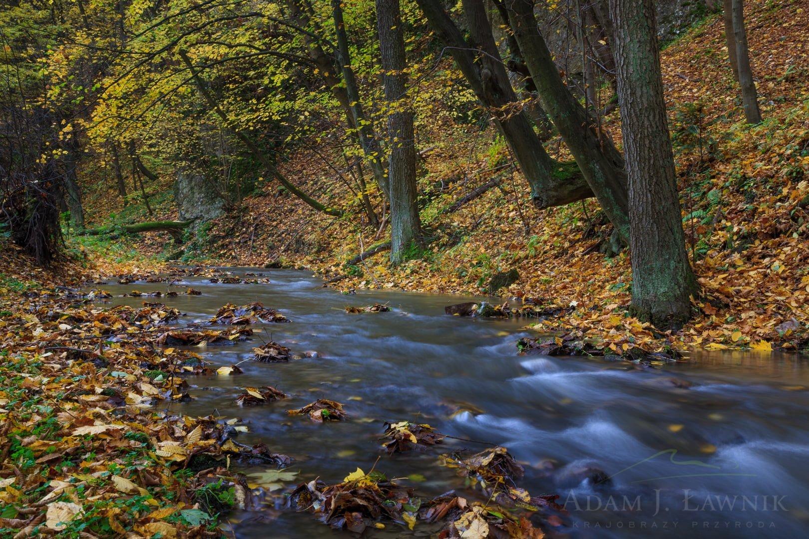 Ojców National Park, Poland 0810-00955C