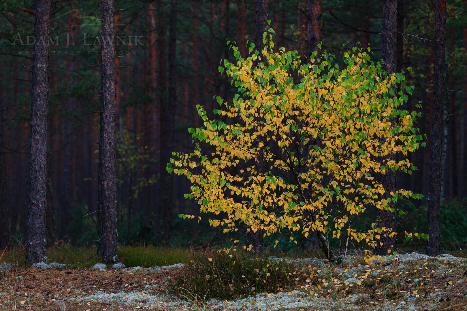 Bory Tucholskie National Park, Poland 0910-01418C
