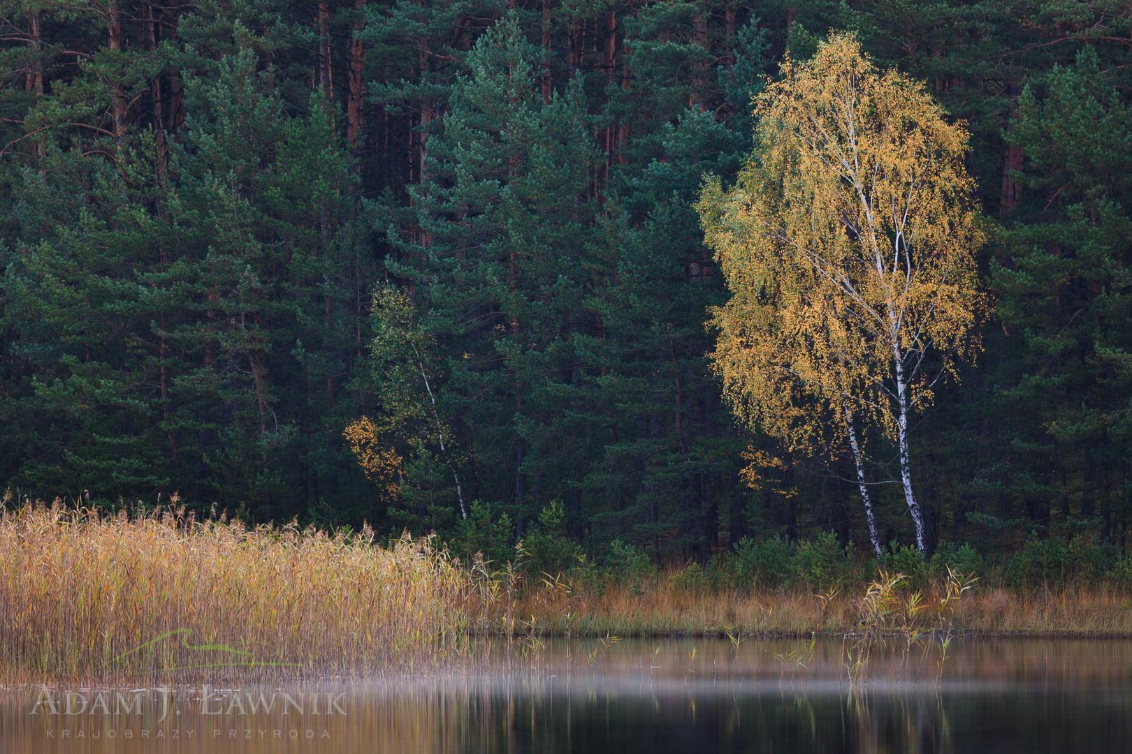 Bory Tucholskie National Park, Poland 0910-01445C