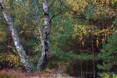 Bory Tucholskie National Park, Poland 0910-01447C