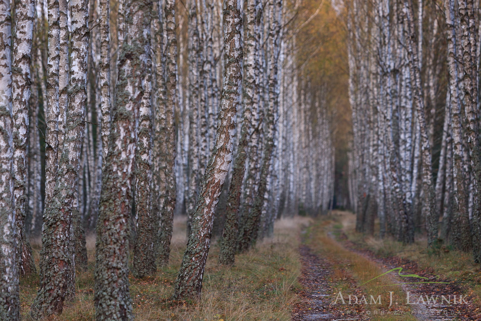 Bory Tucholskie National Park, Poland 0910-01454C