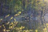 Bory Tucholskie National Park, Poland 1104-00882C