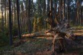 Bory Tucholskie National Park, Poland 1104-00883C