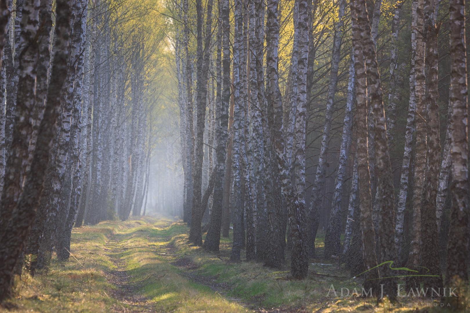 Bory Tucholskie National Park, Poland 1104-00885C