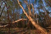 Bory Tucholskie National Park, Poland 1104-00917C