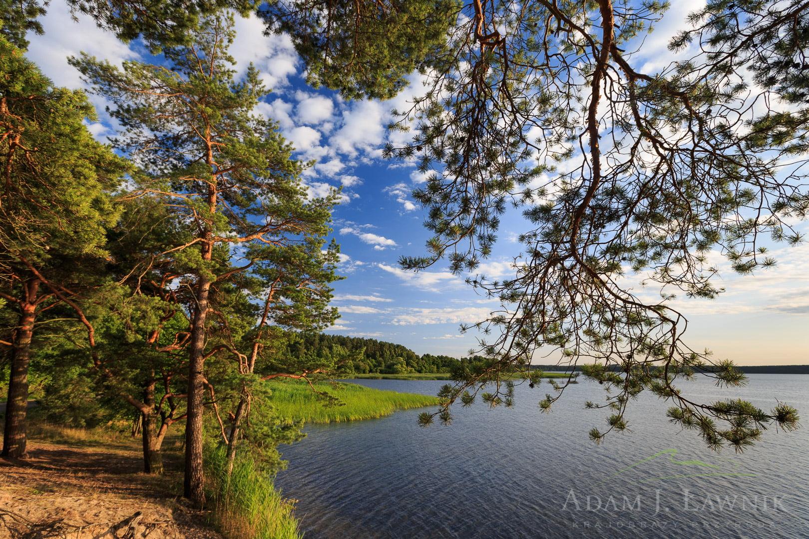 Bory Tucholskie National Park, Poland 1307-00889C