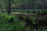 Bory Tucholskie National Park, Poland 1307-00902C