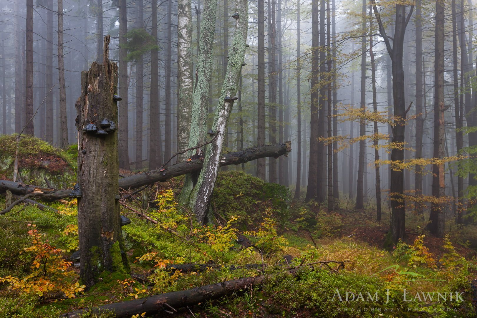 Jesienny las spowity poranną mgłą
