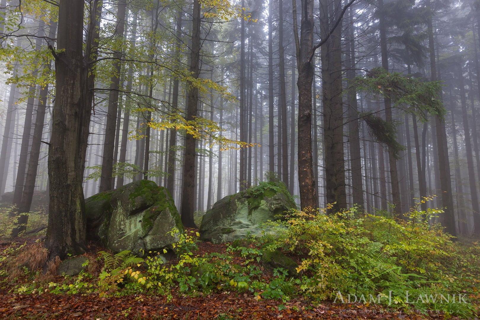 Stołowe Mountains National Park, Poland 1110-02183C