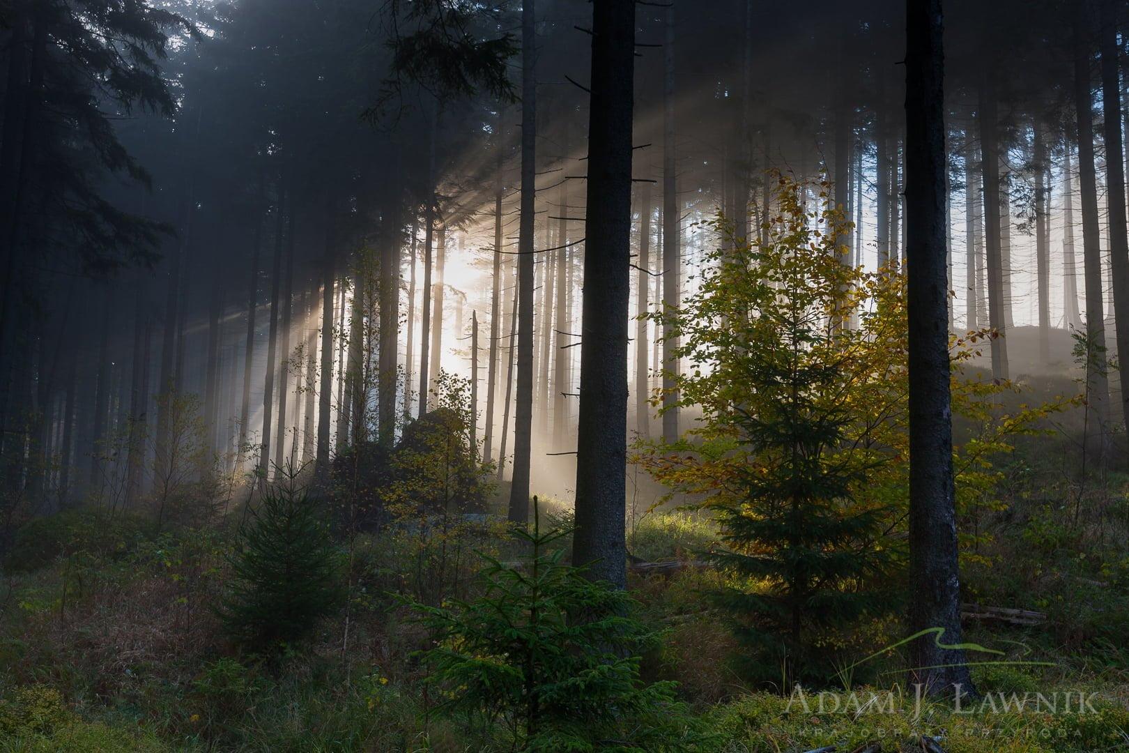 Stołowe Mountains National Park, Poland 1110-02210C