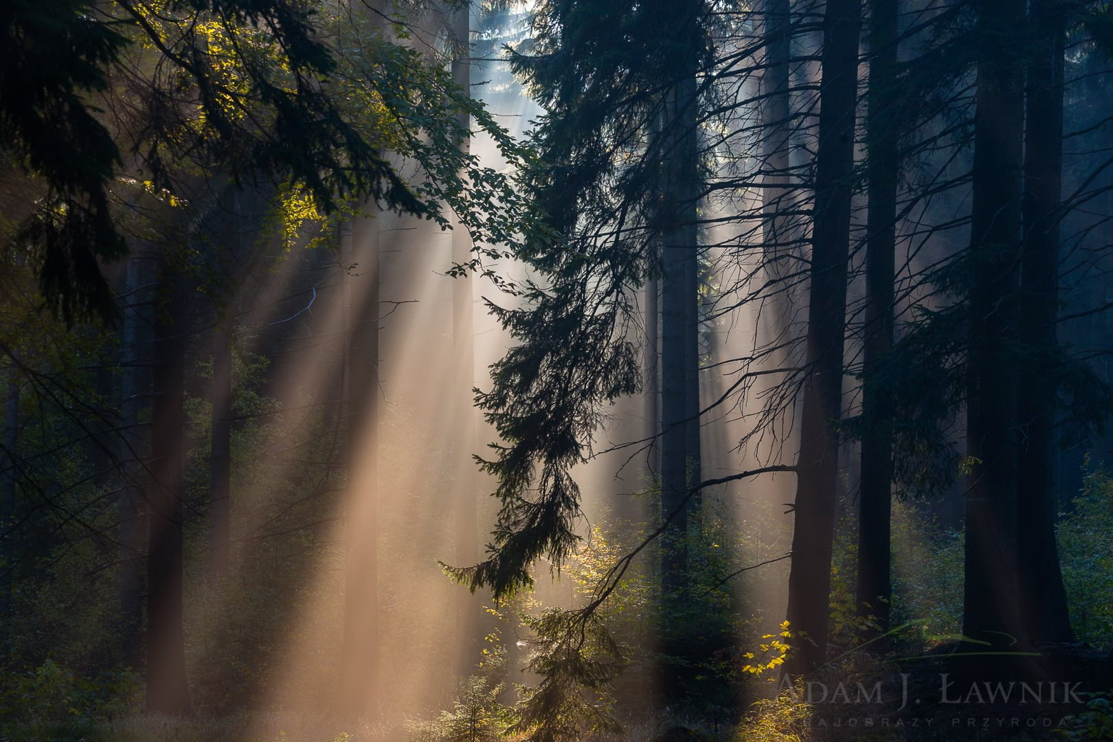 Stołowe Mountains National Park, Poland 1110-02212C