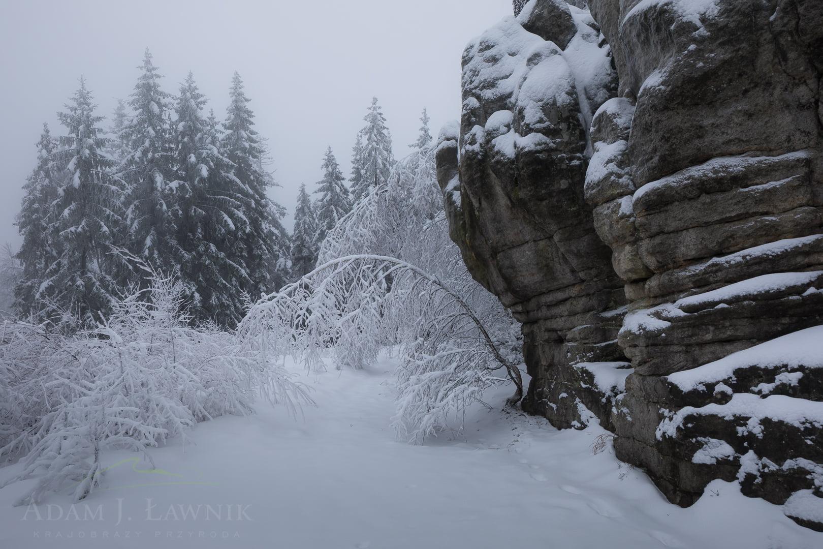 Mglisty zimowy dzień w Górach Stołowych