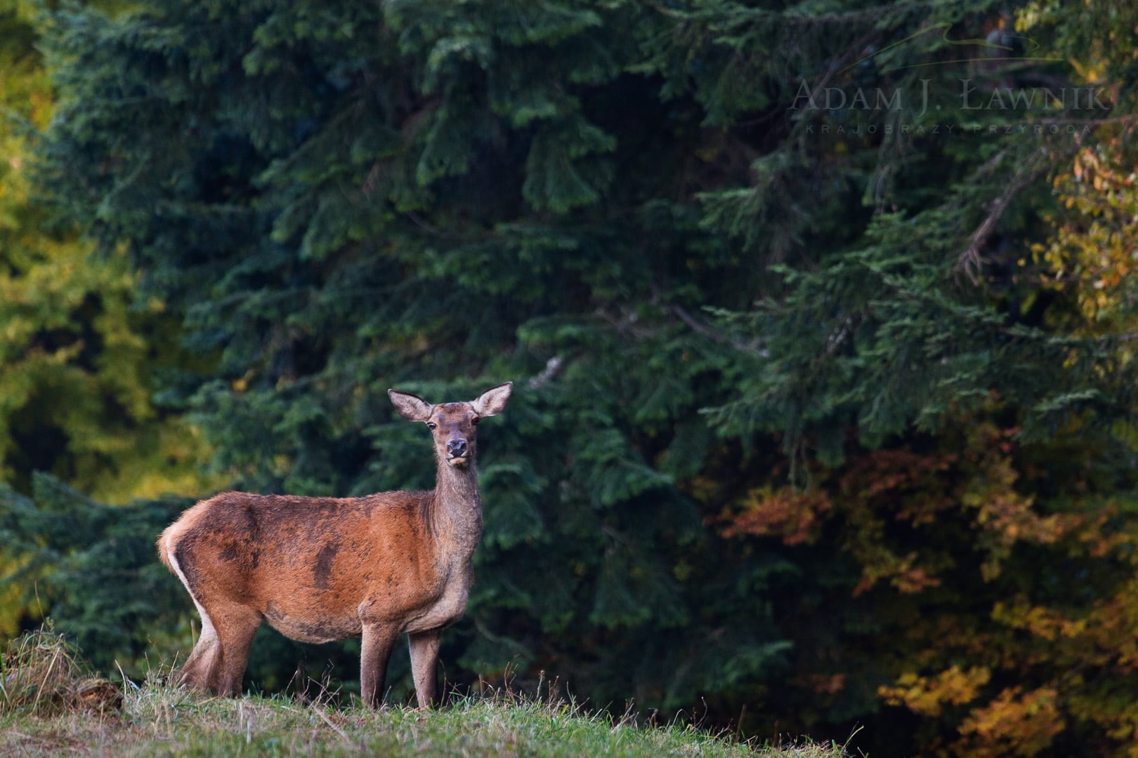 Pieniny National Park, Poland 1010-01474C