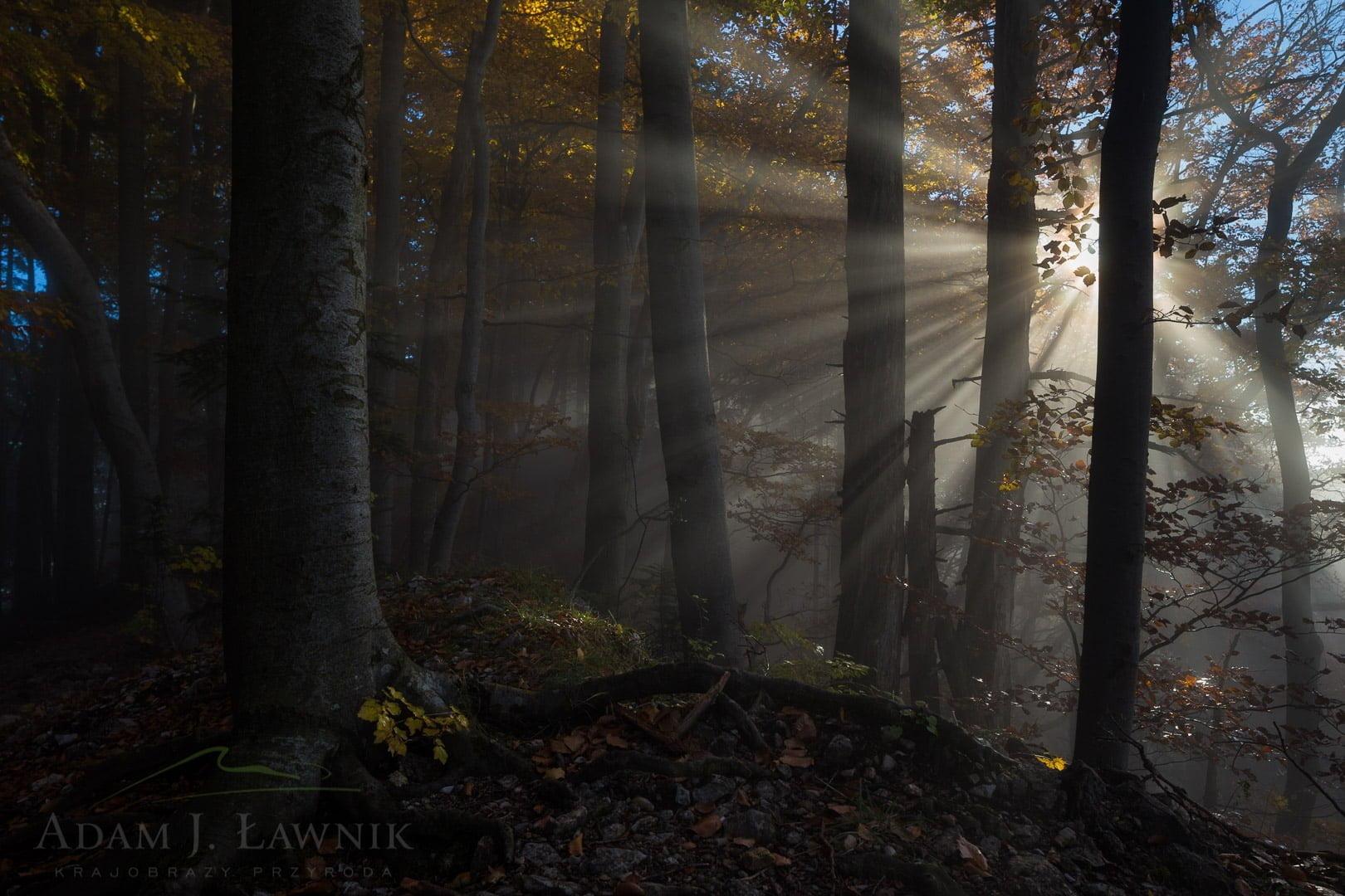 Pieniny National Park, Poland 1510-01373C