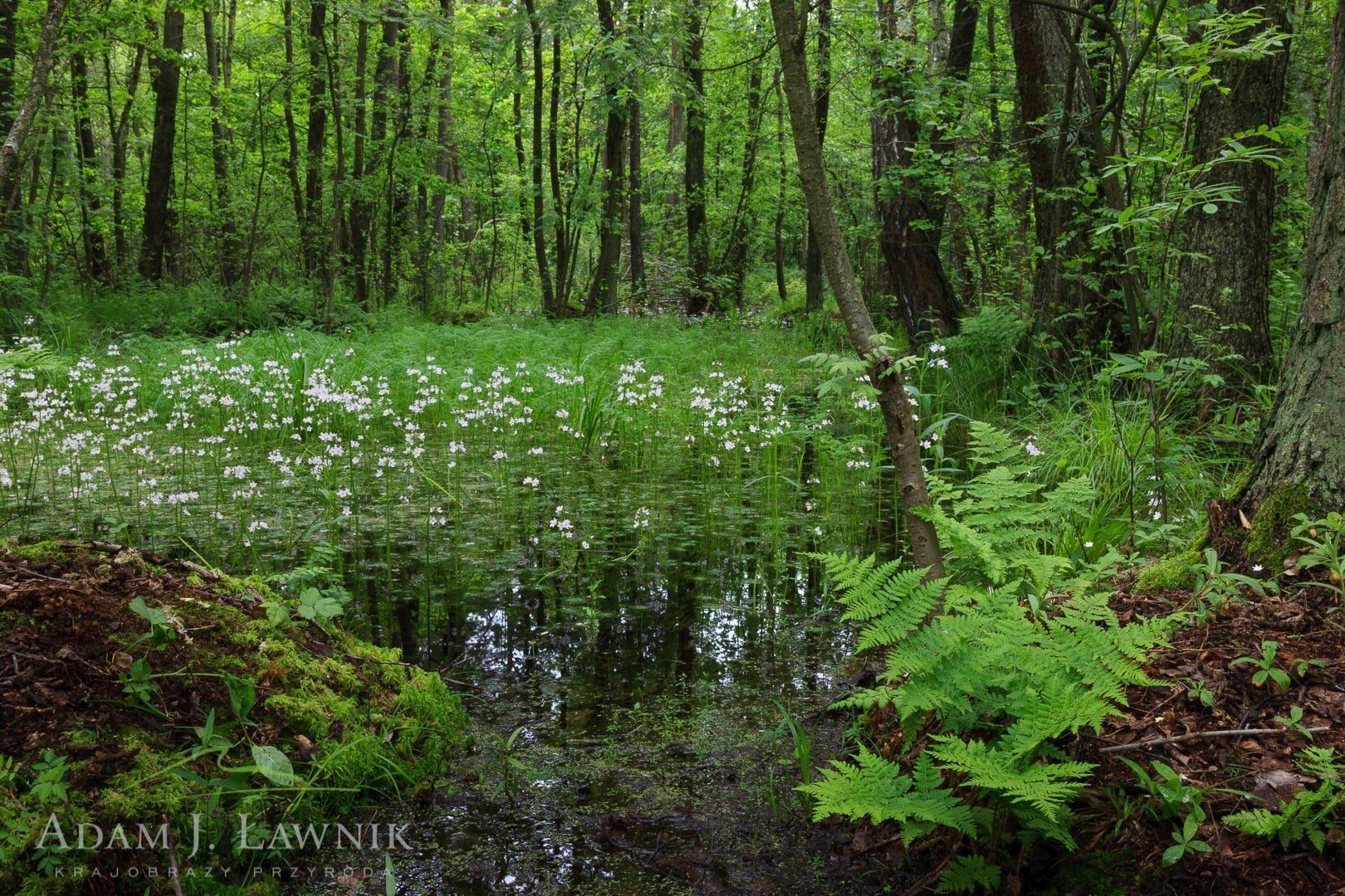 Polesie National Park, Poland 0805-00318C