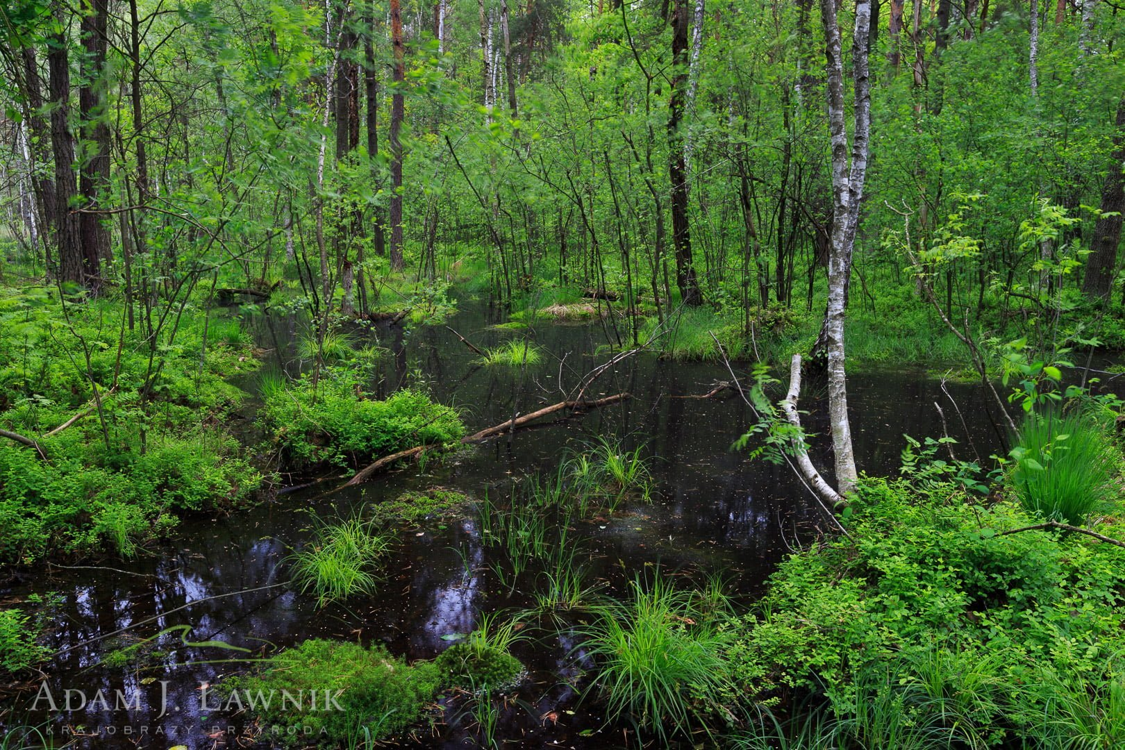 Polesie National Park, Poland 1305-00341C