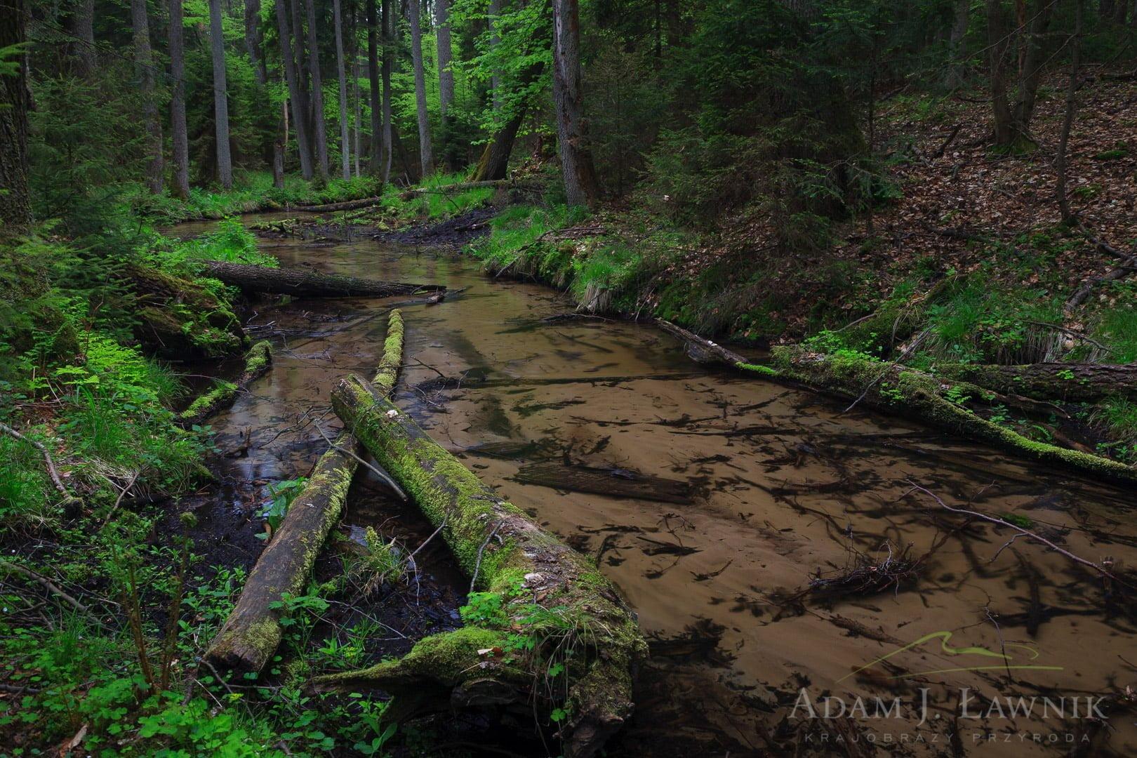 Roztocze National Park, Poland 0905-00262C