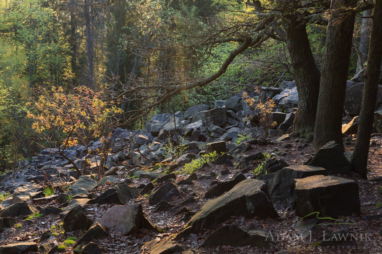 Świętokrzyski National Park, Poland 0805-00178C