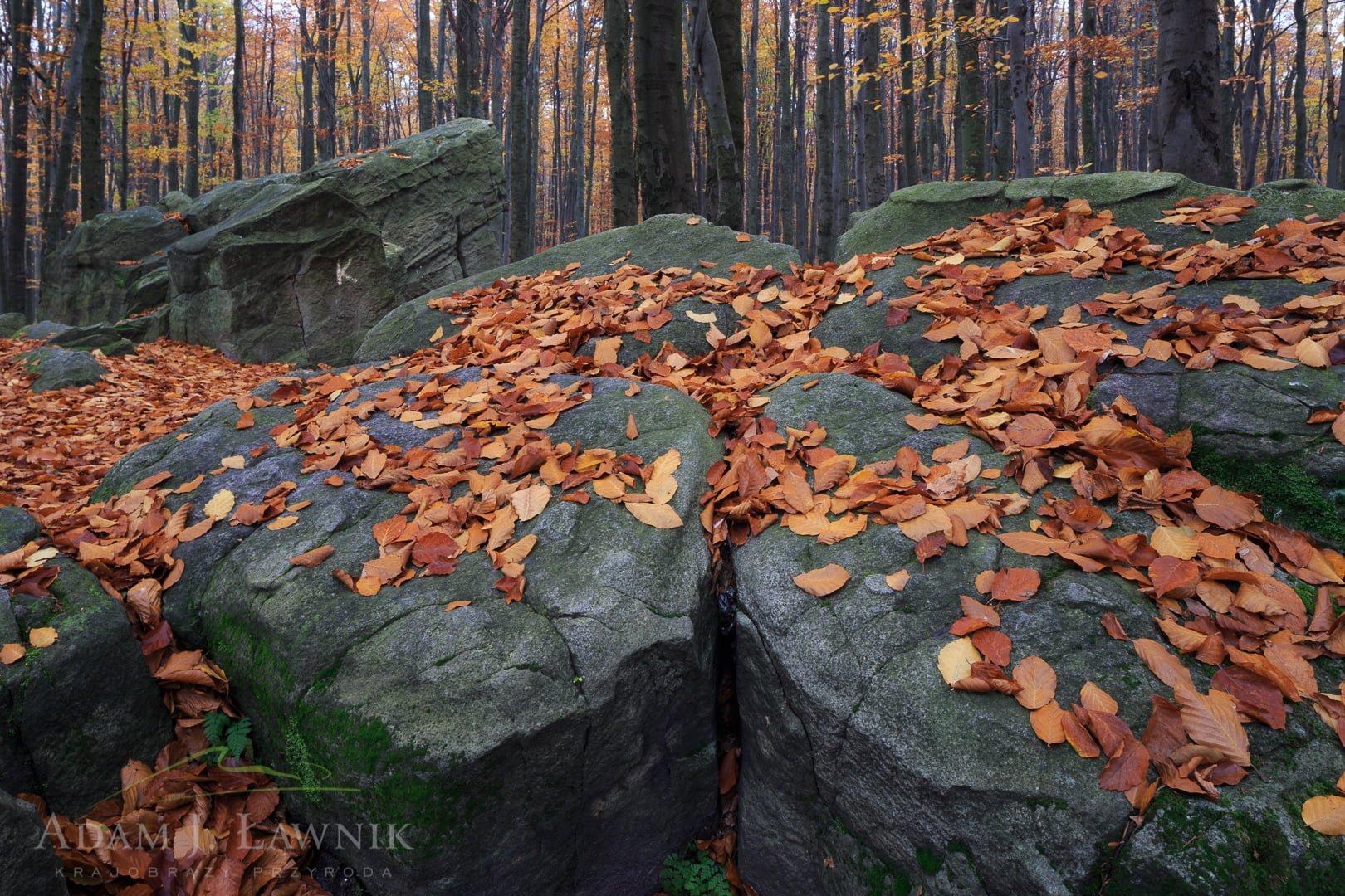 Świętokrzyski National Park, Poland 1310-01301C