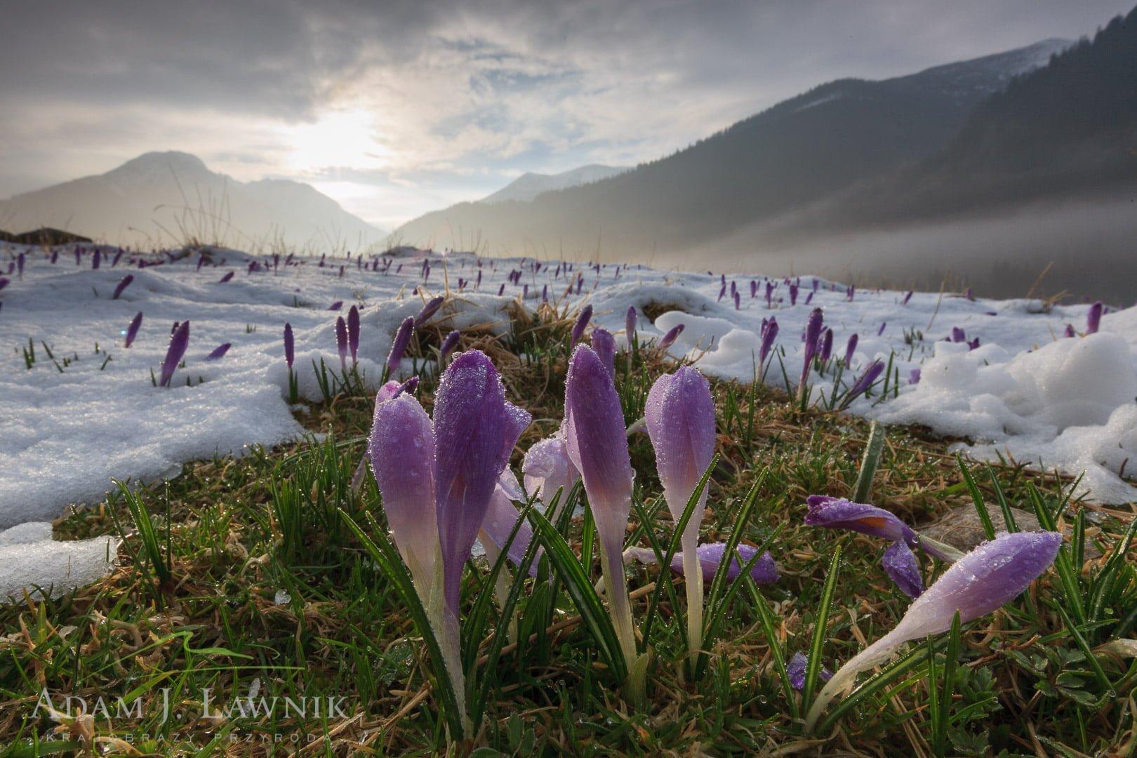 Tatra National Park, Poland 1104-00815C