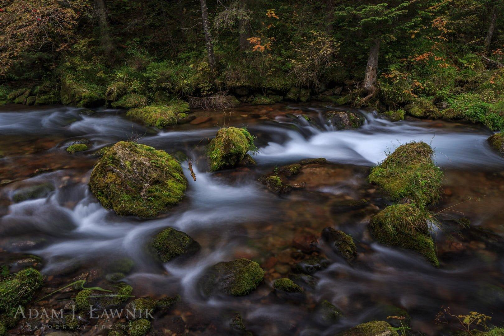 Tatra National Park, Poland 1310-01201C