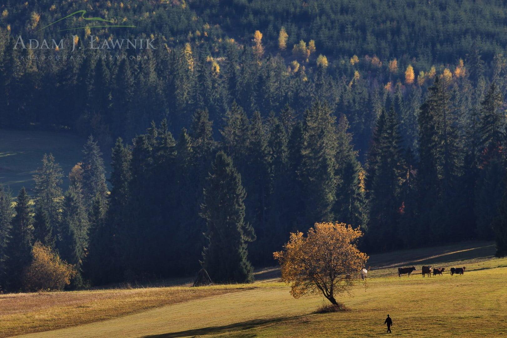 Tatra National Park, Poland 1310-01288C