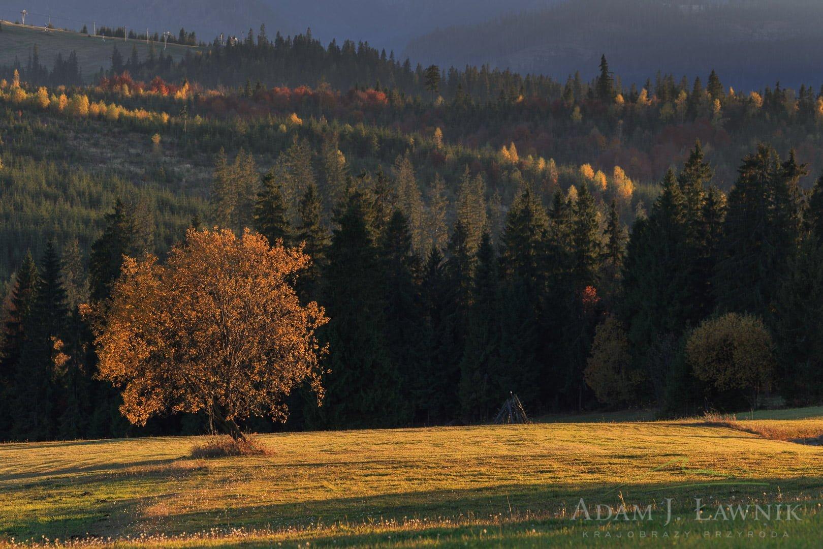 Tatra National Park, Poland 1310-01290C