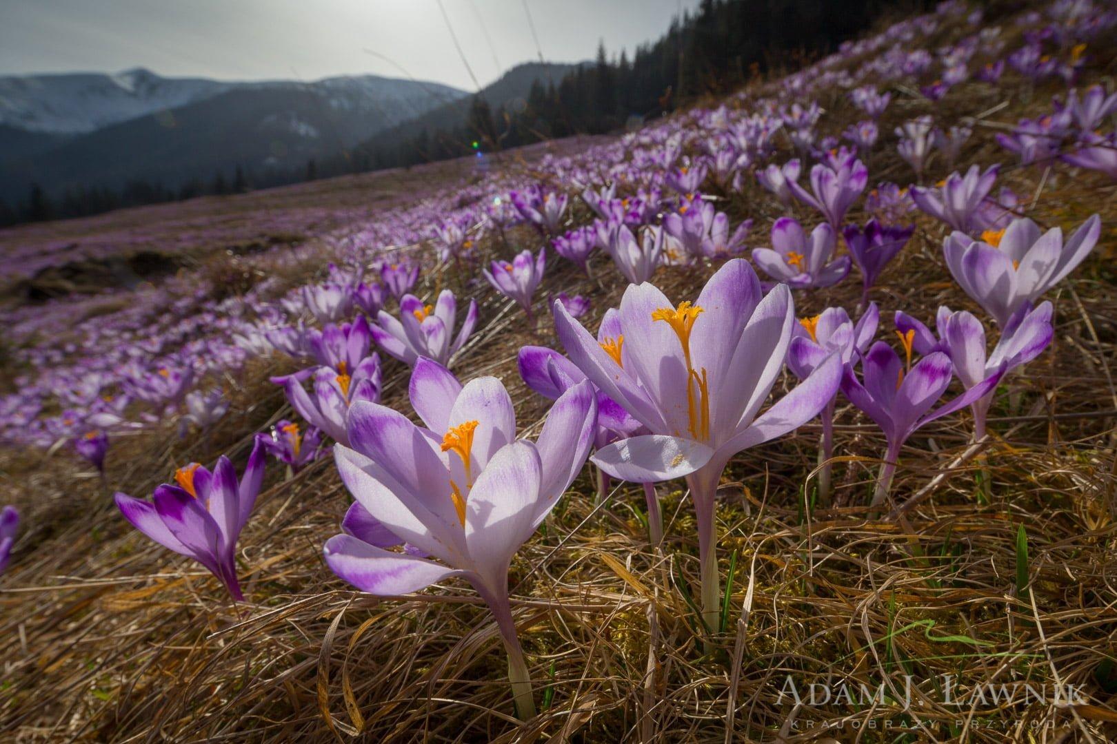 Tatra National Park, Poland 1604-00726C