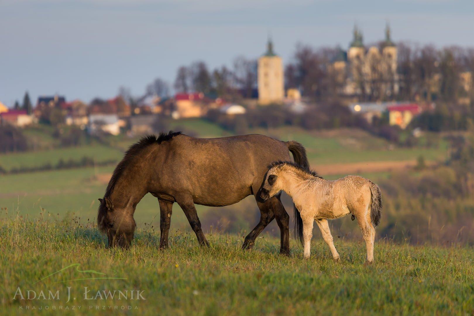 Turnica National Park, Poland 1410-01363C