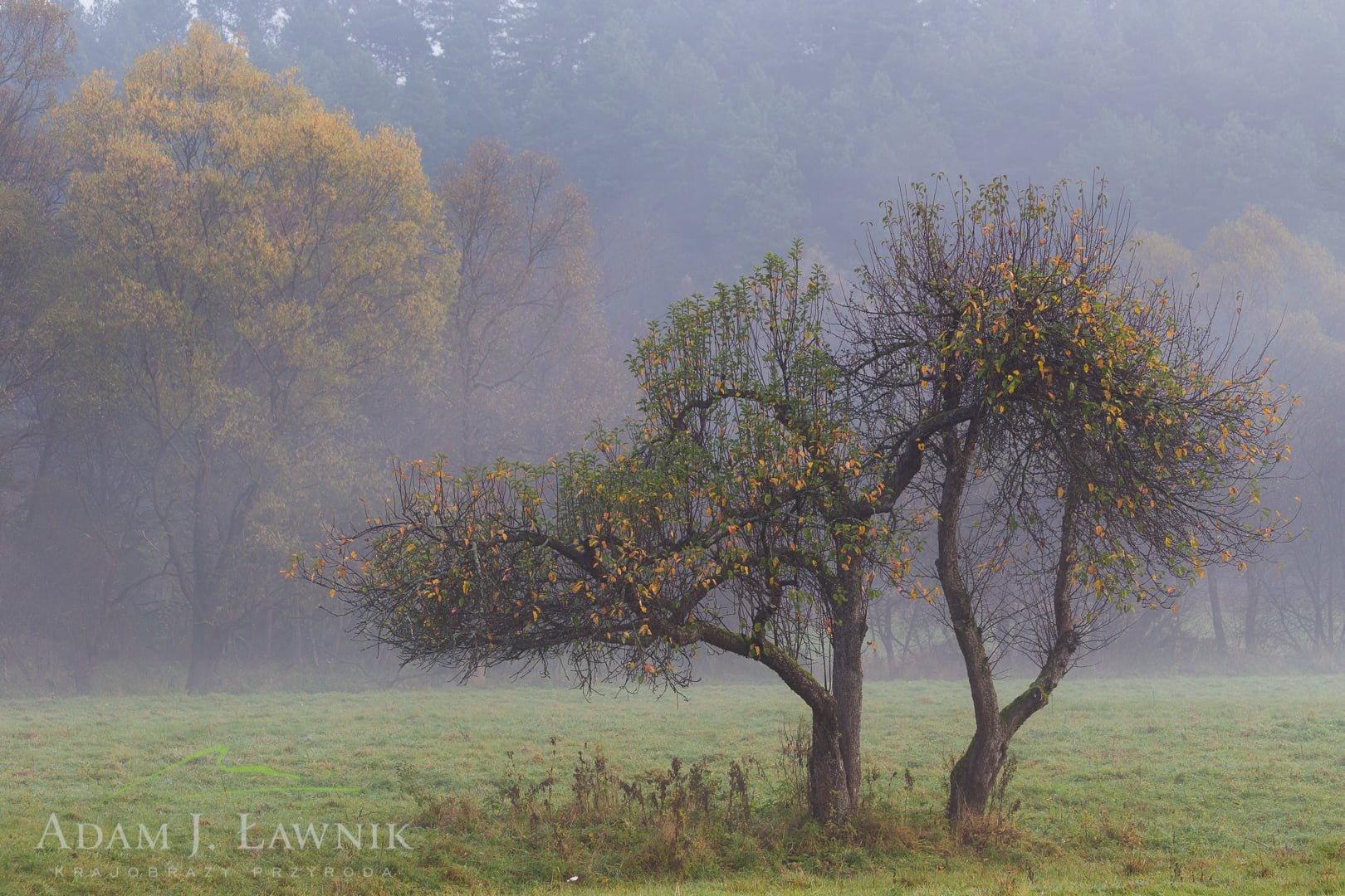 Turnica National Park, Poland 1410-01365C