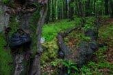 Turnica National Park, Poland 1505-00809C