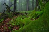 Turnica National Park, Poland 1505-00812C