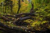 Turnica National Park, Poland 1510-01332C