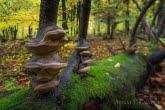 Turnica National Park, Poland 1510-01337C