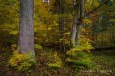 Turnica National Park, Poland 1510-01343C