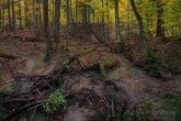 Turnica National Park, Poland 1510-01345C