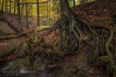 Turnica National Park, Poland 1510-01347C