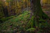 Turnica National Park, Poland 1510-01351C