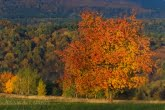 Turnica National Park, Poland 1510-01360C